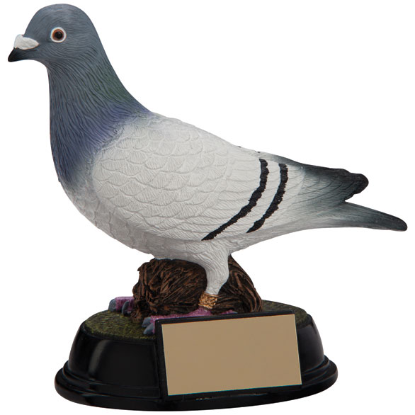 Elite Pigeon Racing Award